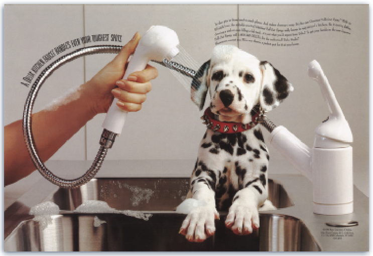 dalmation getting a bath